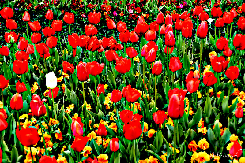 (CreativeWork) Floriade Study #138 by Simon Mitrovich. photograph. Shop online at Bluethumb.