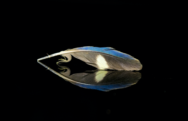 (CreativeWork) Mallee Ringneck 1 by Stefanie Roeske. photograph. Shop online at Bluethumb.