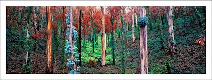 (CreativeWork) Regrowth, Snowy Mountains, Australia by Paul Foley. photograph. Shop online at Bluethumb.