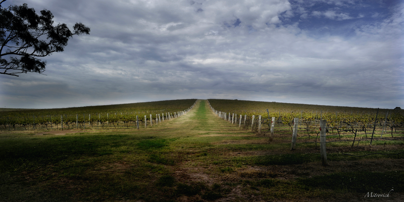 (CreativeWork) The Path Study#222 by Simon Mitrovich. photograph. Shop online at Bluethumb.