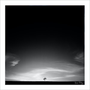 (CreativeWork) Lone Tree, Hunter Valley, Australia Ed. 1 of 5 by Paul Foley. #<Filter:0x00005589e9147af8>. Shop online at Bluethumb.