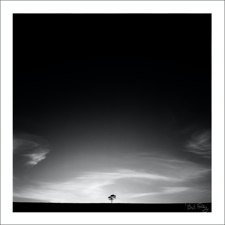 (CreativeWork) Lone Tree, Hunter Valley, Australia Ed. 1 of 5 by Paul Foley. Photograph. Shop online at Bluethumb.