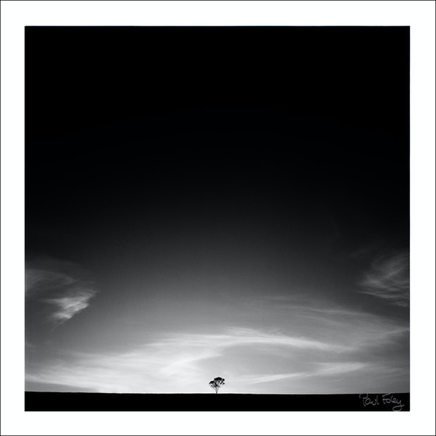 Lone Tree, Hunter Valley, Australia