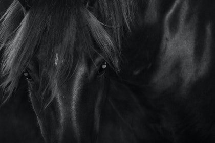 (CreativeWork) Untitled 1,  Brumby by Ebony Finck. photograph. Shop online at Bluethumb.