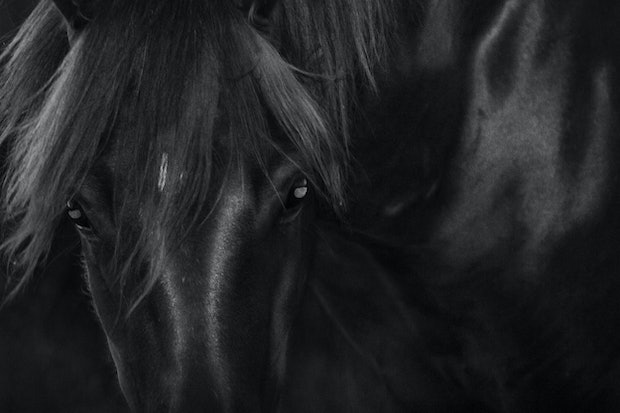 Untitled 1,  Brumby