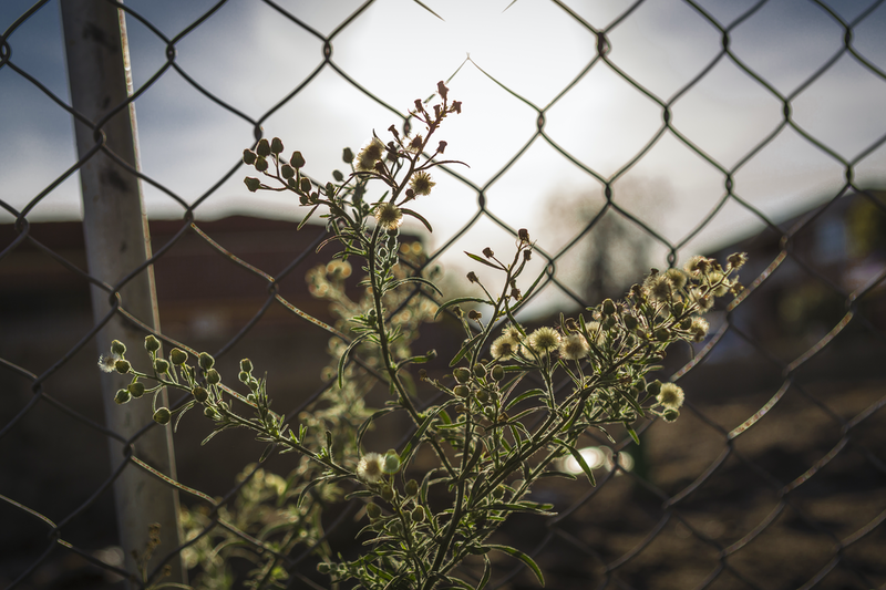 (CreativeWork) nature meets industry Ed. 1 of 50 by Megan George. photograph. Shop online at Bluethumb.