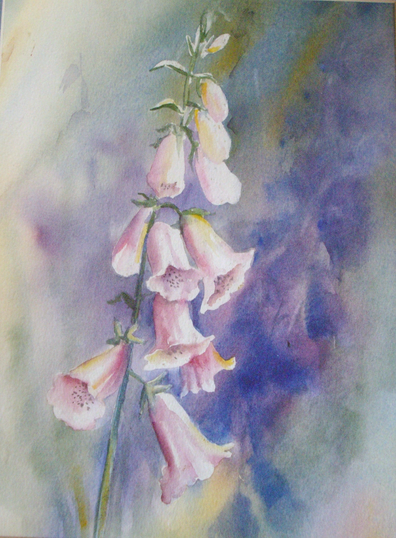 (CreativeWork) foxgloves by Jenny Hartley. watercolour. Shop online at Bluethumb.