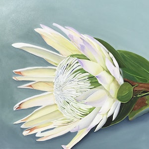 (CreativeWork) King Protea- One of 100 limited edition bespoke fine art print Ed. 7 of 100 by Hayley Kruger. print. Shop online at Bluethumb.