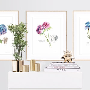 (CreativeWork) Botanical Collection (5 watercolour paintings) limited edition prints Ed. 10 of 100 by Darlene Lavett. print. Shop online at Bluethumb.