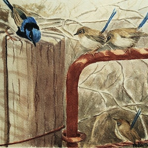 (CreativeWork) Blue Wrens by Peter Macdonald. watercolour. Shop online at Bluethumb.