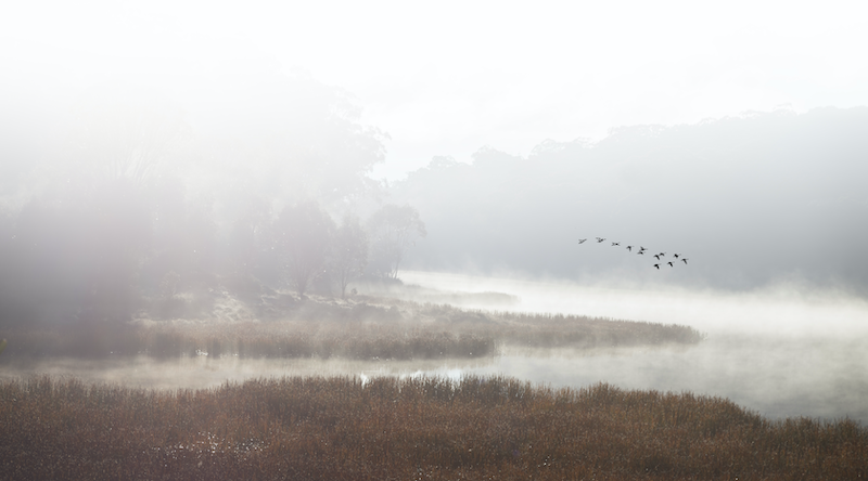 (CreativeWork) Mist over  Lake  Catani by Robert Armitage. photograph. Shop online at Bluethumb.