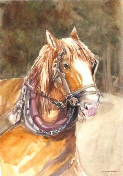 (CreativeWork) Freedom by Helen Elphinstone - King. watercolour. Shop online at Bluethumb.