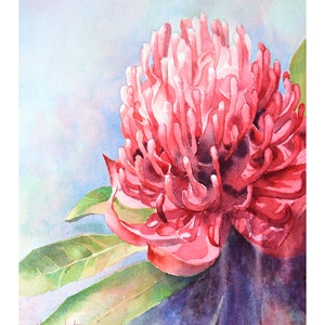 (CreativeWork) Red Waratah by Chrysovalantou Mavroudis. Watercolour Paint. Shop online at Bluethumb.