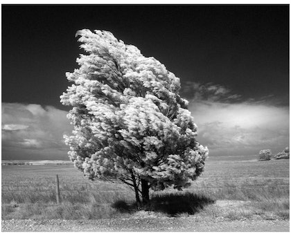 (CreativeWork) Mallee Wind by Alex Frayne. photograph. Shop online at Bluethumb.