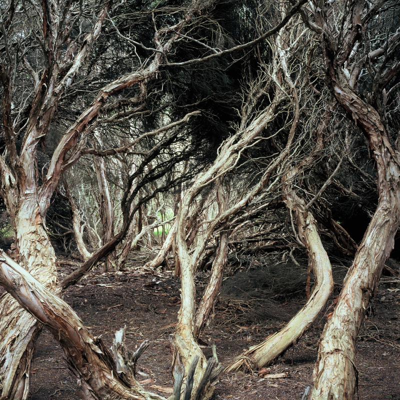 (CreativeWork) Paperbark Drama by Alex Frayne. photograph. Shop online at Bluethumb.
