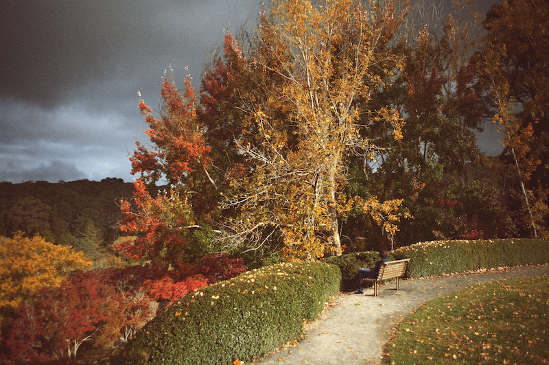 (CreativeWork) Autumn Melancholic by Alex Frayne. photograph. Shop online at Bluethumb.