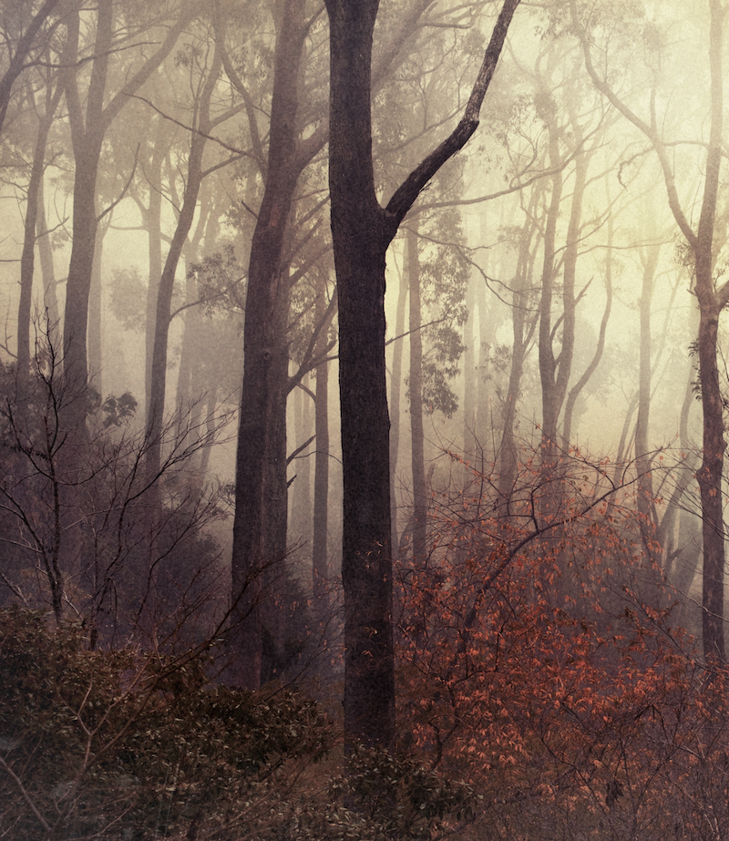 (CreativeWork) Tree Lines by Alex Frayne. photograph. Shop online at Bluethumb.