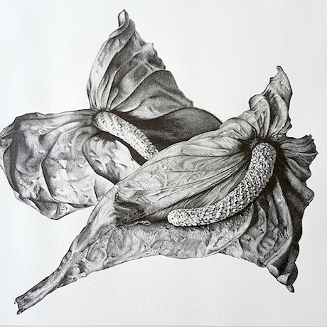 (CreativeWork) I desired my dust to be mingled with yours by Michelle Henry. Drawings. Shop online at Bluethumb.