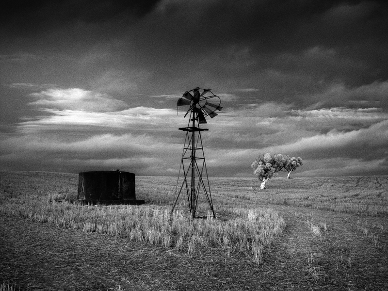 (CreativeWork) Mallee Noir by Alex Frayne. photograph. Shop online at Bluethumb.