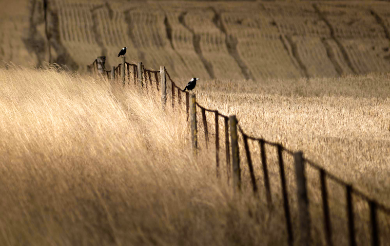 (CreativeWork) Maggies by Alex Frayne. photograph. Shop online at Bluethumb.