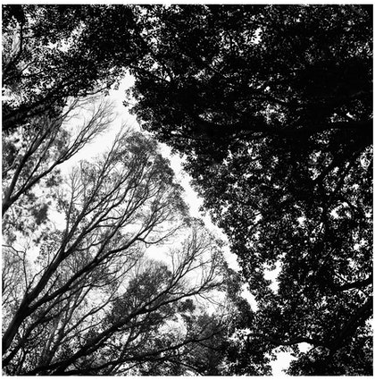 (CreativeWork) Canopy by Alex Frayne. photograph. Shop online at Bluethumb.