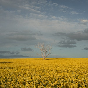 (CreativeWork) Mallee Field of Dreams Ed. 1 of 1 by Alex Frayne. photograph. Shop online at Bluethumb.