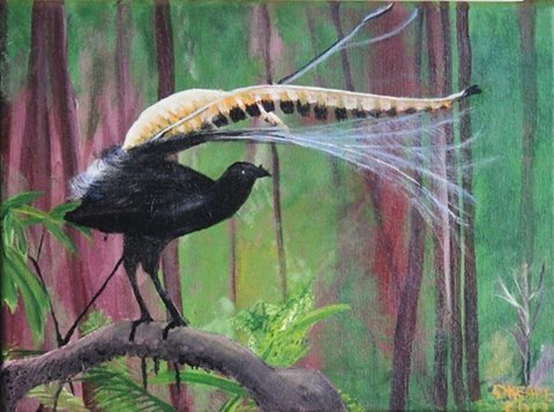 australian lyre bird by dennis heape paintings for sale bluethumb