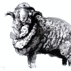 (CreativeWork) The Merino by Soo Beng Lim. drawing. Shop online at Bluethumb.