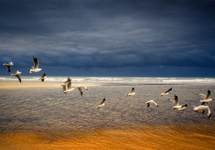 (CreativeWork) Freedom Birds by Alex Frayne. photograph. Shop online at Bluethumb.