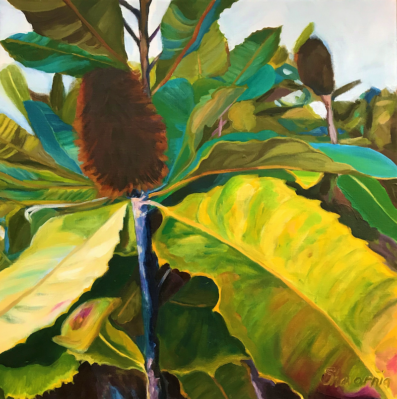 (CreativeWork) Banksia Beauty by Shavarnia Williams. arcylic-painting. Shop online at Bluethumb.