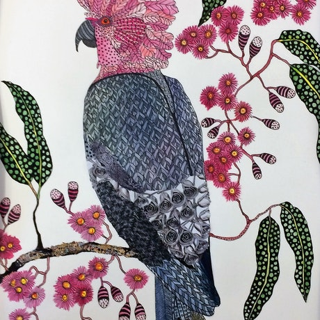 (CreativeWork) Everybody's heard about the bird: Pink and Grey Galah by Jude Willis. Watercolour Paint. Shop online at Bluethumb.