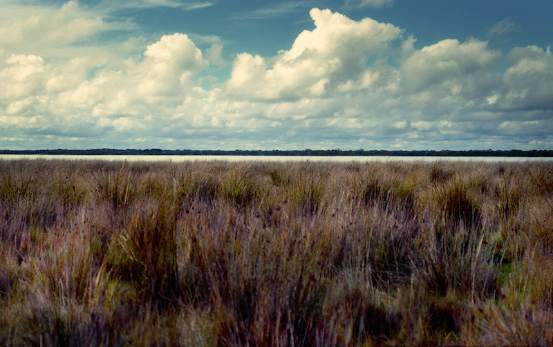 (CreativeWork) Coorong Linear by Alex Frayne. photograph. Shop online at Bluethumb.