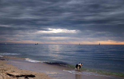 (CreativeWork) Sea Dog by Alex Frayne. photograph. Shop online at Bluethumb.
