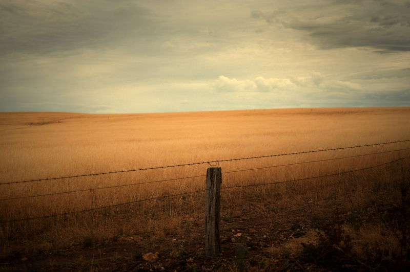 (CreativeWork) Mallee Faraway by Alex Frayne. photograph. Shop online at Bluethumb.