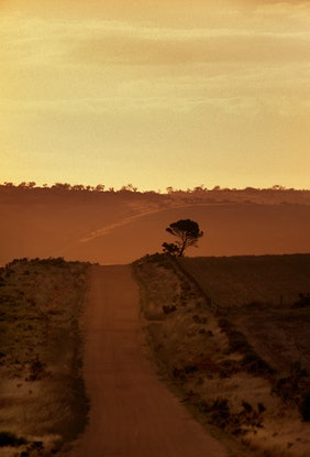 (CreativeWork) Mallee, Far, Faraway Ed. 1 of 1 by Alex Frayne. Photograph. Shop online at Bluethumb.