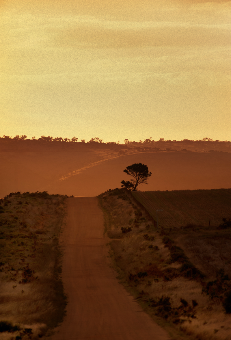 (CreativeWork) Mallee, Far, Faraway by Alex Frayne. photograph. Shop online at Bluethumb.