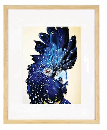 (CreativeWork) Amelia the black cockatoo  Ed. 25 of 50 by HEYLIE MORRIS. #<Filter:0x00007f7b9f29f320>. Shop online at Bluethumb.