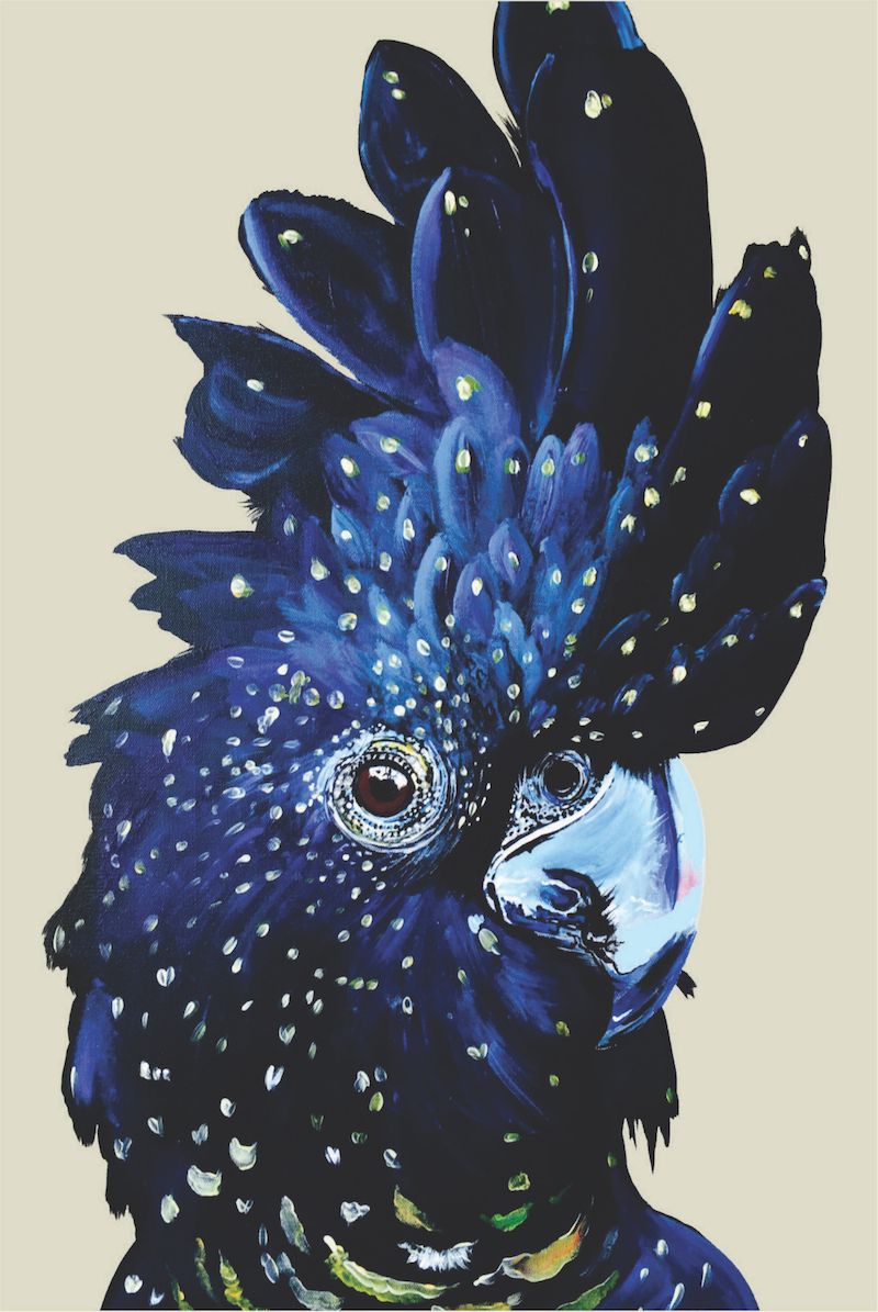 (CreativeWork) Amelia the black cockatoo  Ed. 25 of 50 by HEYLIE MORRIS. print. Shop online at Bluethumb.