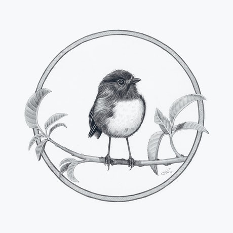 (CreativeWork) South Island Robin – A3 illustration by Clare McCartney. Drawings. Shop online at Bluethumb.