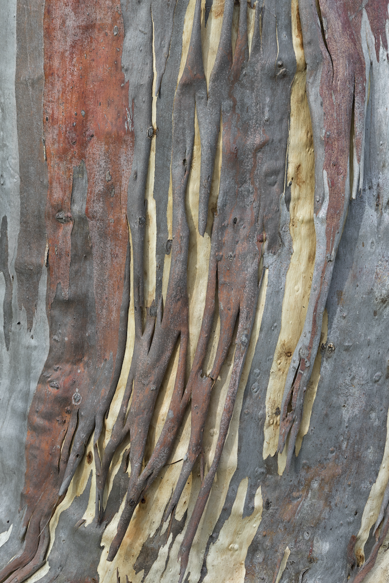 (CreativeWork) Bark No1 by Robert Armitage. photograph. Shop online at Bluethumb.