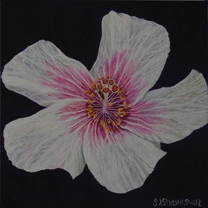 (CreativeWork) Hibiscus flower by Sue Shakeshaft. arcylic-painting. Shop online at Bluethumb.