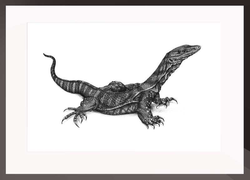 (CreativeWork) Goanna by Jess Black. drawing. Shop online at Bluethumb.