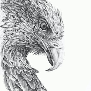(CreativeWork) Eagle Eye by Jess Black. drawing. Shop online at Bluethumb.