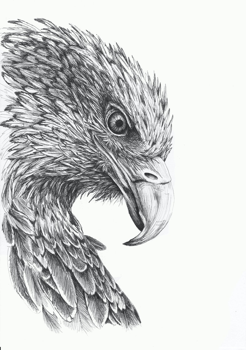 Creativework eagle eye by jess black drawing shop online at bluethumb