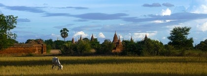 (CreativeWork) BAGAN - MYANMAR by Tony Knight. photograph. Shop online at Bluethumb.