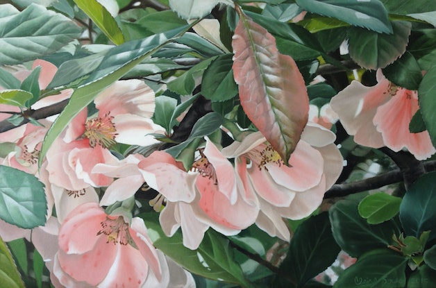 (CreativeWork) the blossoms by Claire Souter. Oil Paint. Shop online at Bluethumb.