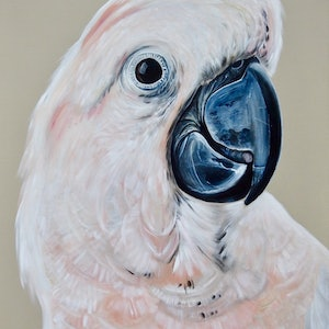 (CreativeWork) Moluccan Cockatoo  by HEYLIE MORRIS. arcylic-painting. Shop online at Bluethumb.