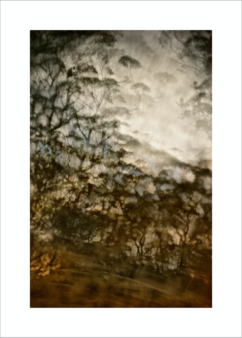 (CreativeWork) SPIRIT OF THE WOLLEMI by Karen Visser. photograph. Shop online at Bluethumb.