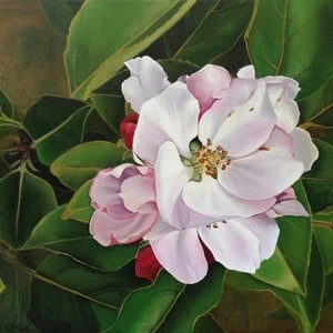 (CreativeWork) apple blossom by Claire Souter. oil-painting. Shop online at Bluethumb.