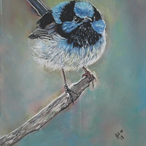 (CreativeWork) Blue Wren by Julie Hollis. arcylic-painting. Shop online at Bluethumb.